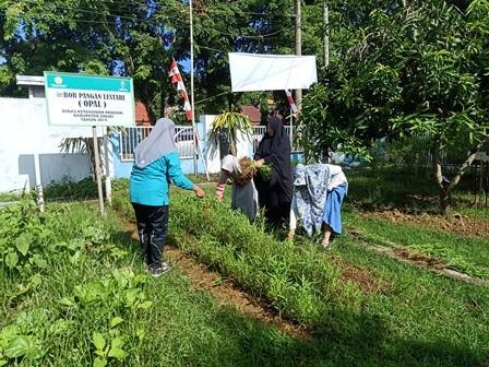 Pertanian Organik Aman untuk Kesehatan